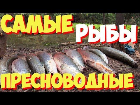 Самые большие пресноводные рыбы в мире | ТОП 10 самых больших пресноводных рыб в мире