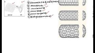 Carbon Nanotube (CNT), What is Carbon Nanotube, Types of Carbon Nanotube .....
