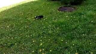 Думал коту плохо, а он с ночной смены!