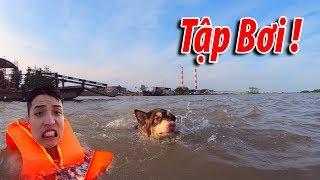 NTN  - 4K Gấu Alaska Đi Bơi Suýt Chết Đuối (Alaska dog swimming lesson and almost die)
