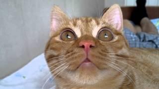 кот Марсик.mp4