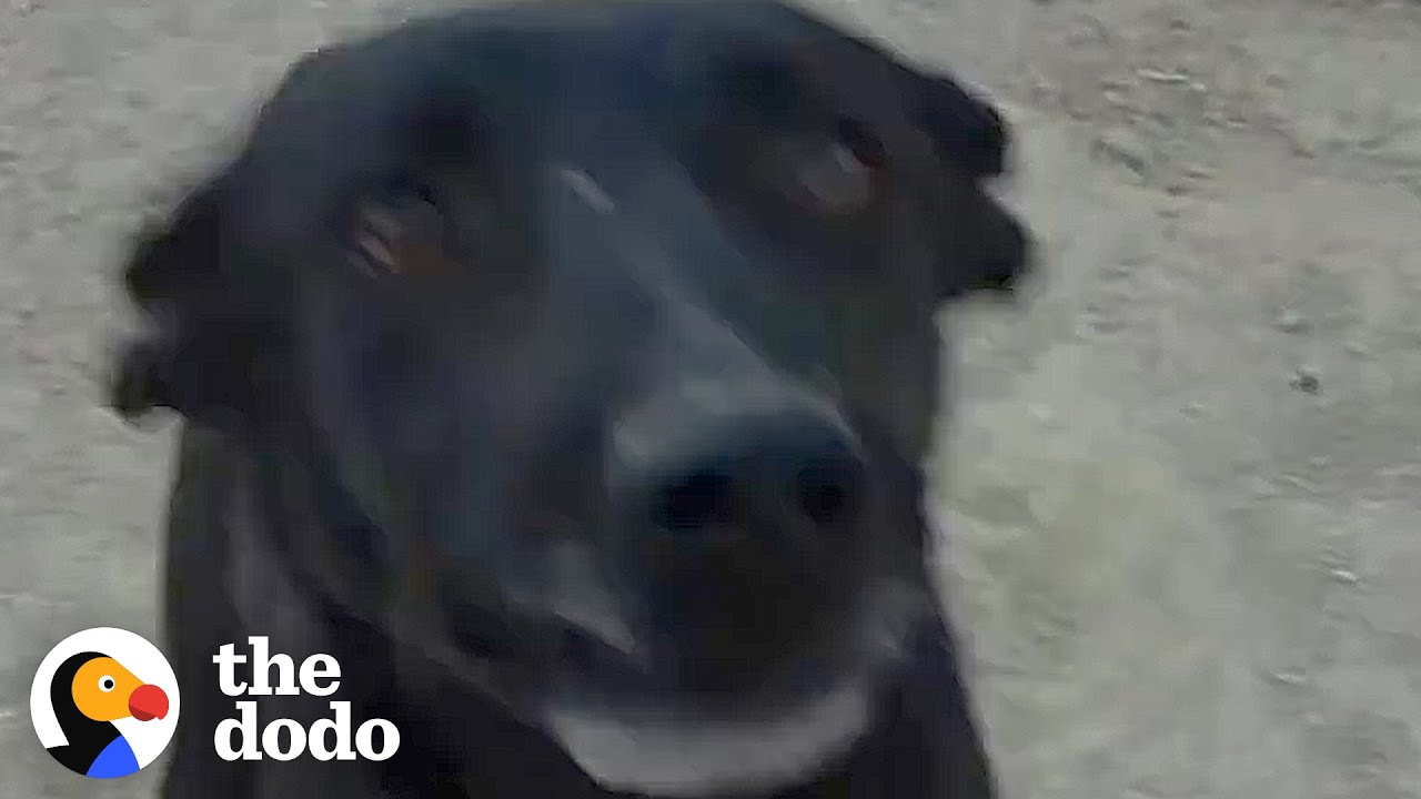 Dog Tied To Tree With A Bell Is So Happy Now| The Dodo