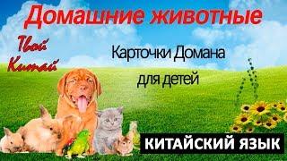 """Карточки Домана для детей - КИТАЙСКИЙ ЯЗЫК - """"Домашние животные"""""""
