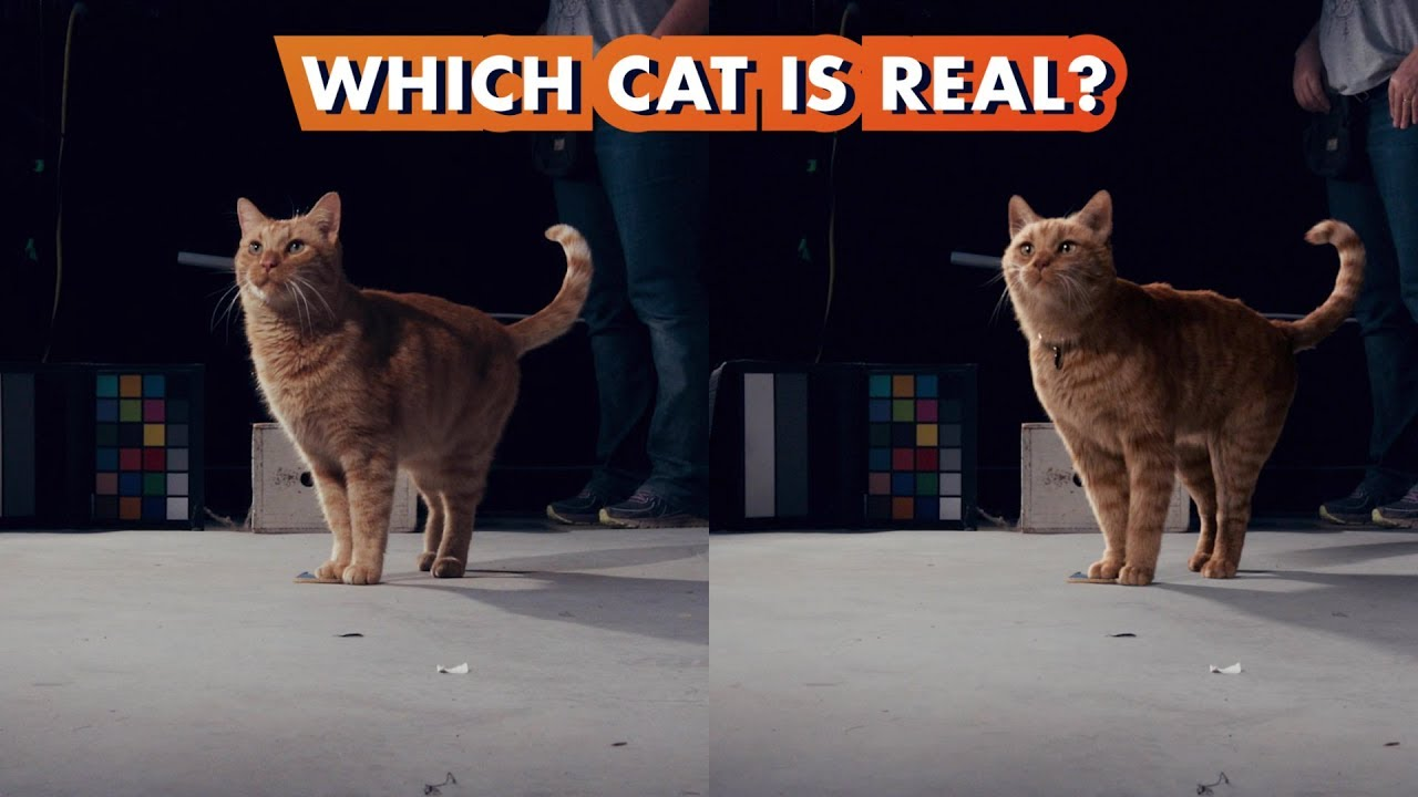 captain marvel's goose: the truth is a lot of cat shots are vfx