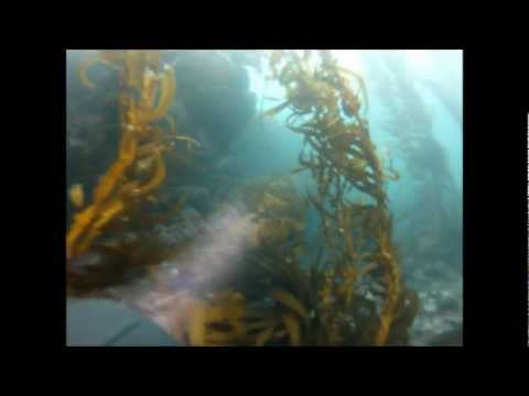 Go Pro Southern California - Scuba Diving - With Dan P. - Crystal Cove 3.23.12