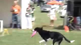 Disk Dogs - Disc Dogs - Frisbee Dogs