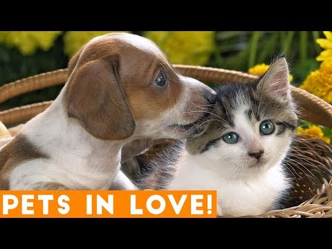 Cutest Pets in Love Compilation of 2018 | Funny Pet Videos