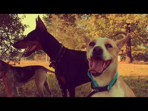 Dogs in Texas - Sugar Tree, Buttermilk & Baladi road trip! (slo-mo HD)