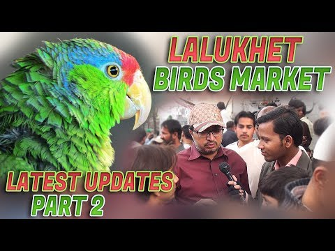Lalukhet Sunday Birds Market Latest Update 11-2-2018 (Jamshed Asmi Informative Channel)In Urdu/Hindi