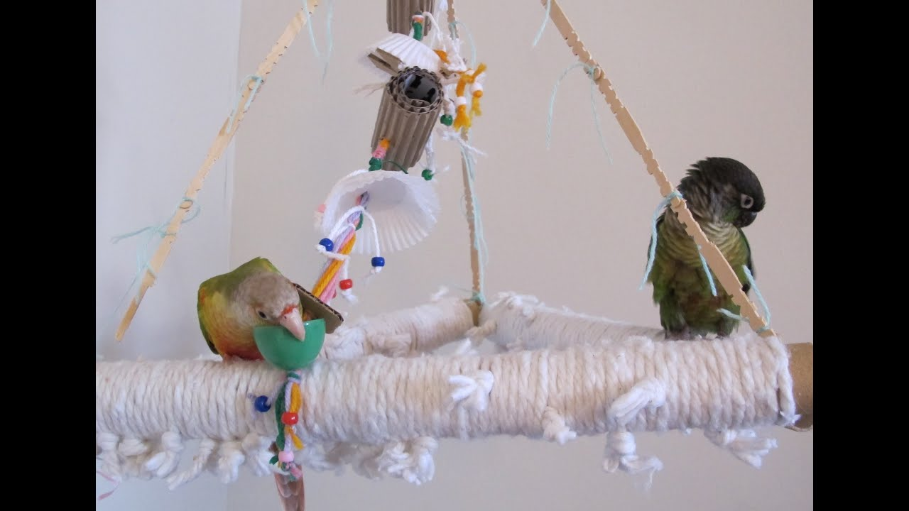 Make Your Own Bird Toys : Birds playing with homemade toy youtube