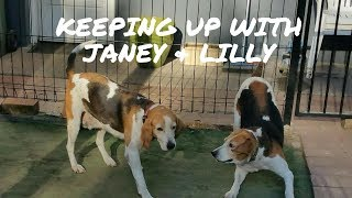 Janey & Lilly were found at a truck stop while heavily pregnant. Th...