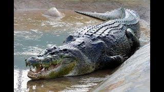 Le plus grand crocodile du monde [Doc HD] - Le roi des crocodiles