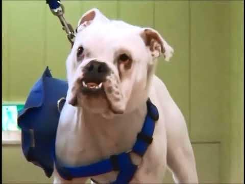 Phim hài Nhật Bản - Chó & Khỉ thông minh phần 1 - Tập 9 [HD] (15:00 )