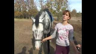 конный спорт.mp4