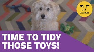Teaching your dog to tidy up! | Dogs Trust Training School