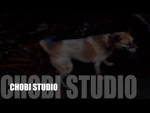 【マンガロール犬チョビさん】ゴミ捨て場に萌えるインド犬チョビ