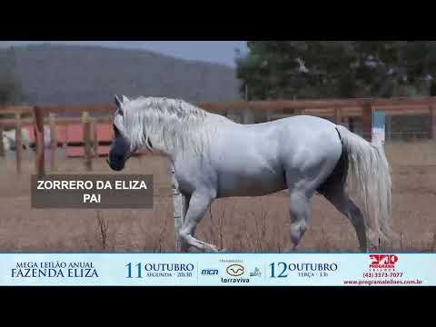 lote 1013 - DOUTOR DA ELIZA
