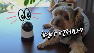 집에 혼자있는 강아지가 걱정된다면 ip카메라를 설치 해…