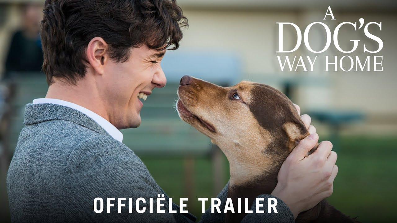 A Dog's Way Home - HD trailer