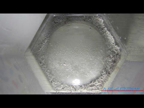 Diatomaceous Earth Vs Fleas Experiment