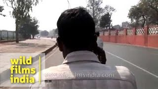 Man talks on phone while riding a cycle rickshaw - Delhi