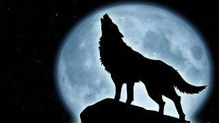 Wolf Music Instrumental - Full Moon