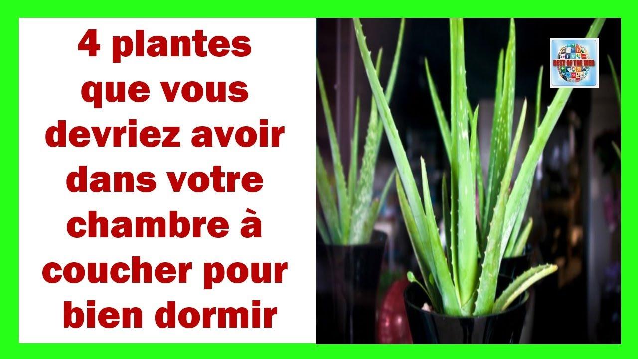4 plantes que vous devriez avoir dans votre chambre coucher pour bien dormir youtube - Plante verte chambre a coucher ...