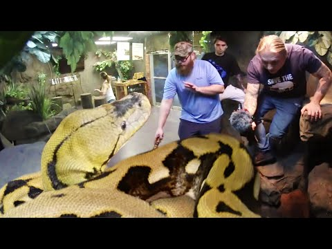 Giant Snake Lucy Give Eric A Really Hard Time Handling!! Scary!!  Brian Barczyk