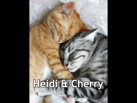 Heidi, Cherry & The Tree - Children's Bedtime Story/Meditation