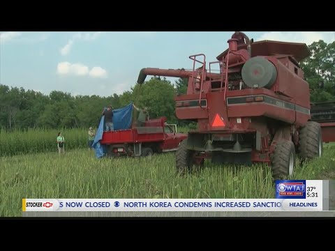 Industrial hemp to soon be legal for farmers