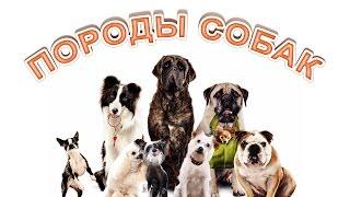 Собаки. Породы собак. Развивающее видео для детей.