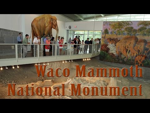 38,000 year old fossils at Waco Mammoth National Monument in Texas
