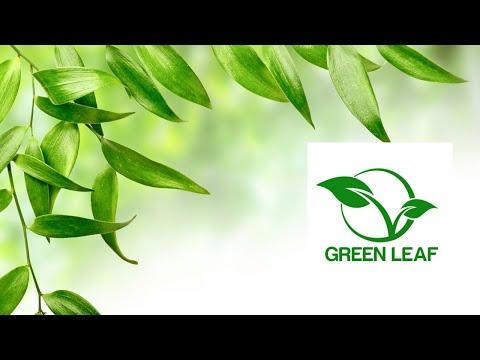 Бизнес с Китаем  Новая сетевая компания Greenleaf #Greenleaf #Гринлиф