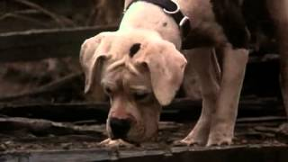 Homeward Bound : The Incredible Journey (partial ending)