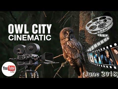 Owl city of june - photo#36