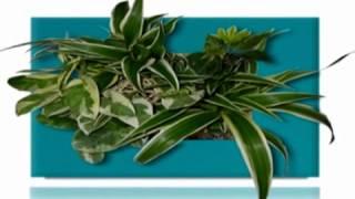 Wallflower - lebende Pflanzenbilder