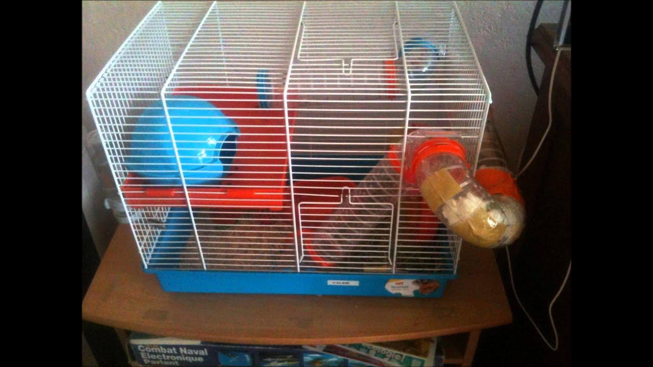 vid o sur les hamster petit conseil pour la cage ect. Black Bedroom Furniture Sets. Home Design Ideas
