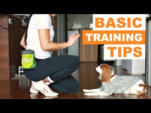 Dog Training 101: How to Teach your Dog Basic Tricks