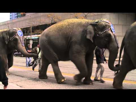 Circus elephants march through downtown Cleveland
