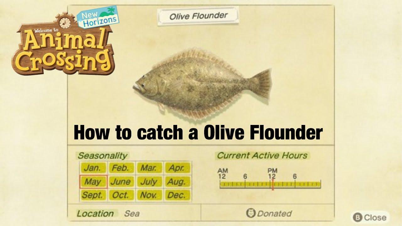 How To Catch A Olive Flounder In Animal Crossing New Horizons Youtube So i'm arguing with gaston about whether this is an olive flounder or a dab.it's clearly an olive flounder, guys, cuz a dab is much darker in color. how to catch a olive flounder in animal crossing new horizons