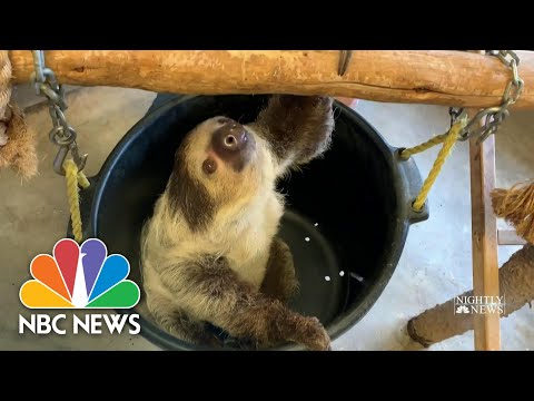 While Zoos Are Closed To The Public, Keepers Care For Animals Big And Small | NBC Nightly News