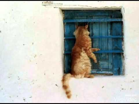 Рыжие коты!!!🐈🐱