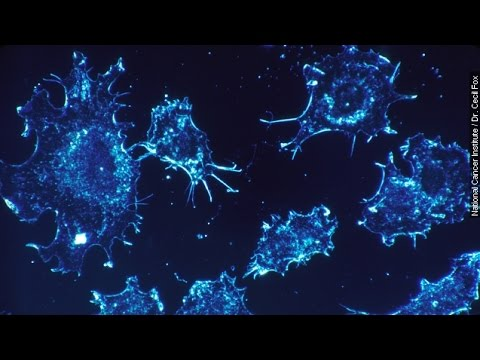 To Control Cancer Cells, Turn Off Their Growth - Newsy