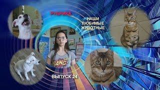 Школьное телевидение ТВ ПЯТЬ А Выпуск 24