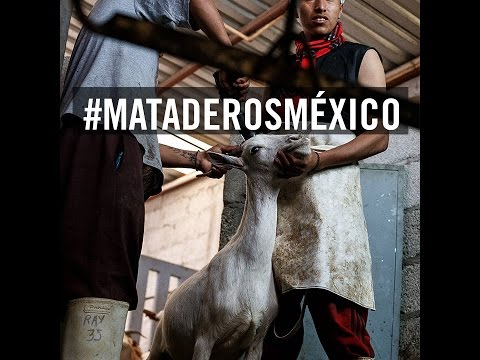#MATADEROSMÉXICO