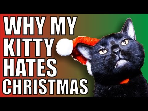 Why my kitty cat hates Christmas