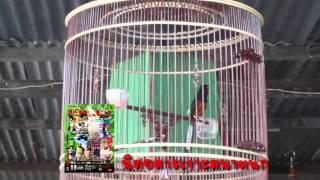 รายการเจาะสนามนก ออนทีวี ตอน บังซิด กับ นกดูดี (ตอน1)