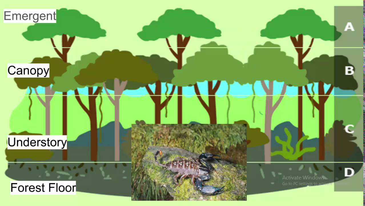 the features of the tropical rain forest biome Tropical rainforest biome skelos97 loading  tropical rain forest - duration:  test new features loading working.