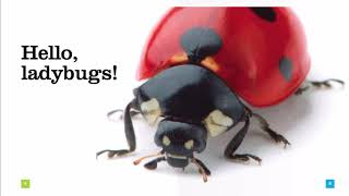 Learn all about ladybugs as you read along. Find out about the life cycle of the little insect and what makes it's body. Look in the pictures to see the tiny body ...