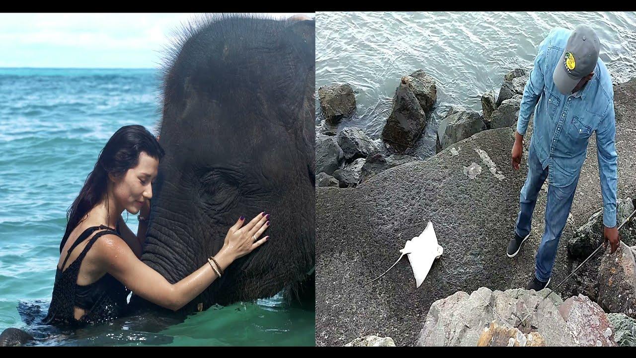 August UN Elephant Month: Sexy Bikini Girl Fishing On Elephant & Shark Alien Abduction
